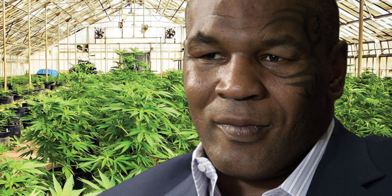 Mike Tyson Opens New 40 Acre Cannabis Ranch After California Legalises Weed Sofa King Cool Magazine Entertainment News
